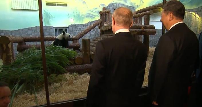 """Čínská """"diplomacie pandy"""" během statní návštěvy v Rusku. Co znamená dárek Si Ťin-pchinga Putinovi? (VIDEO)"""