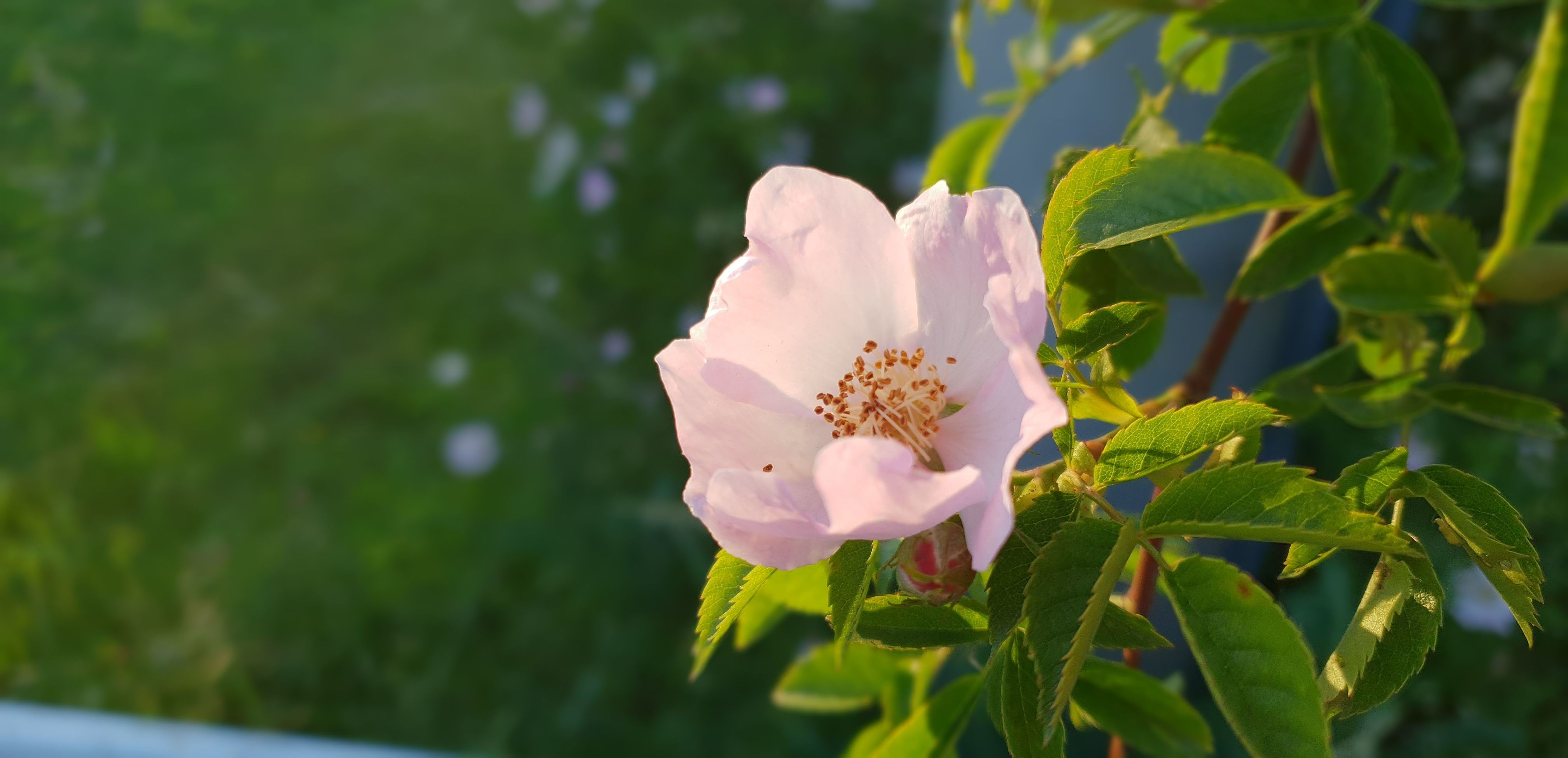 Jak dlouho zůstane tato květina krásná bez včely...