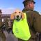 Štěňata zlatého retrívra zastínila vojáky na přehlídce v Chile