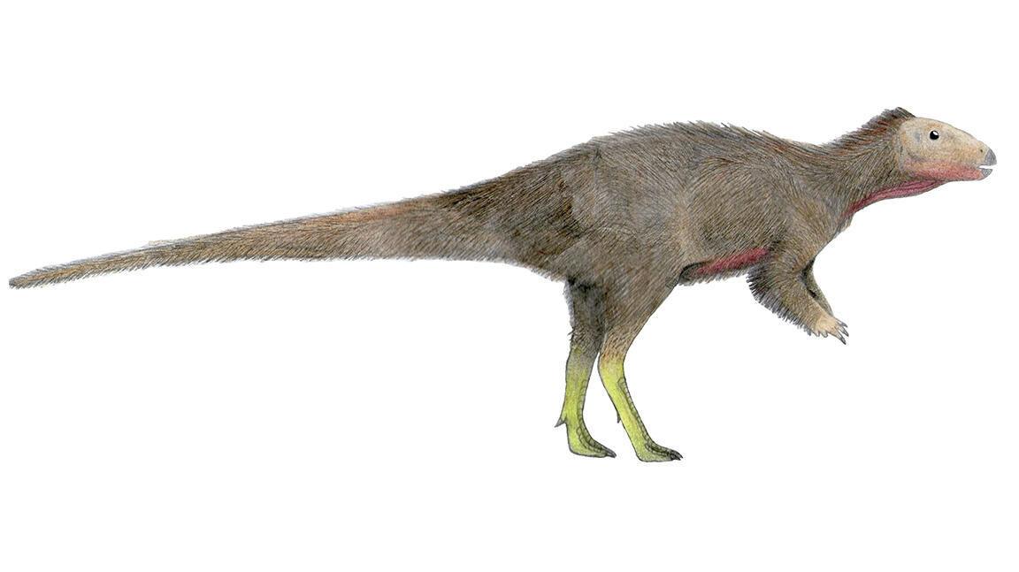 Trinisaura santamartaensis – malý býložravý dinosaurus, který byl nalezen na území dnešní Antarktidy