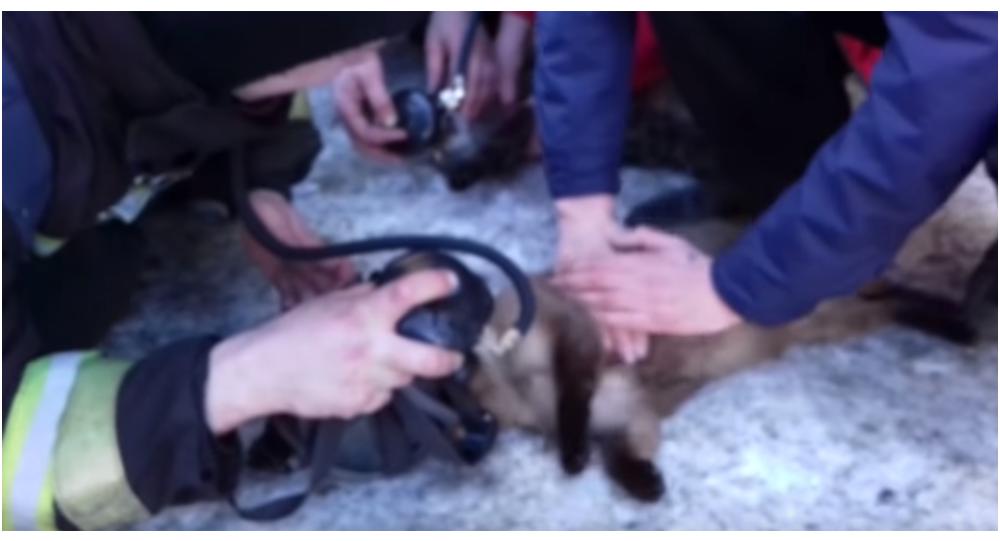 V Magadanu hasiči vzkřísili kočky zachráněné z hořícího bytu (VIDEO)
