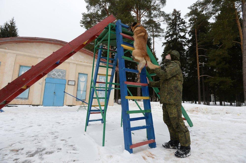 Jak se psi připravují na službu v armádě
