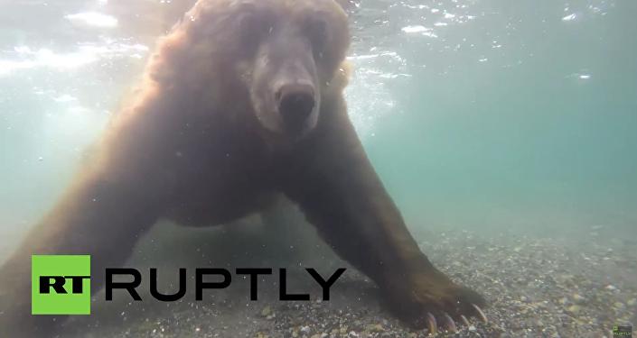 Unikátní záběry: Medvědi loví ryby na Kamčatce