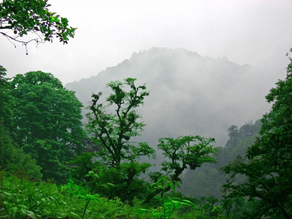 Les listnatých stromů v íránské provincii Gílán