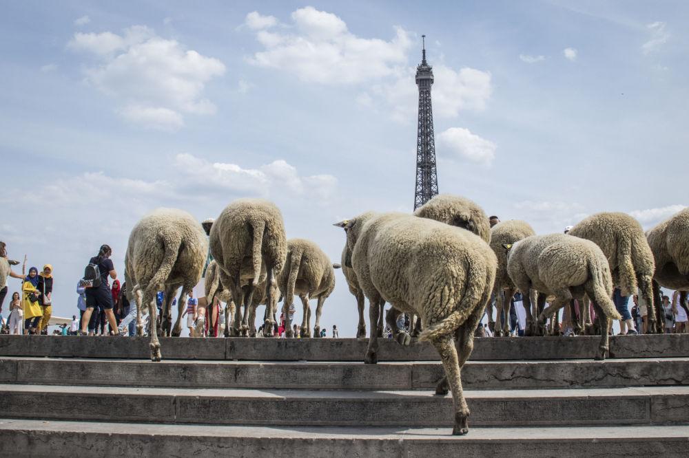 Tento týden v obrázcích: Fotografie z celého světa