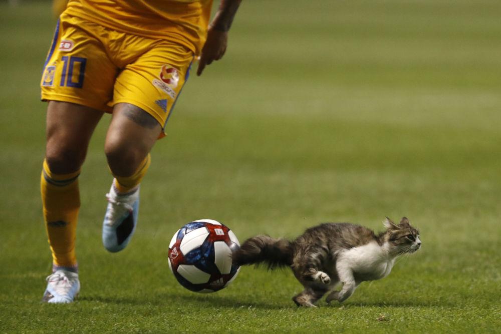 Kocour vyběhl na fotbalové pole během zápasu mezi Tigers UANL a Real Salt Lake na stadionu Salt Lake City v USA.