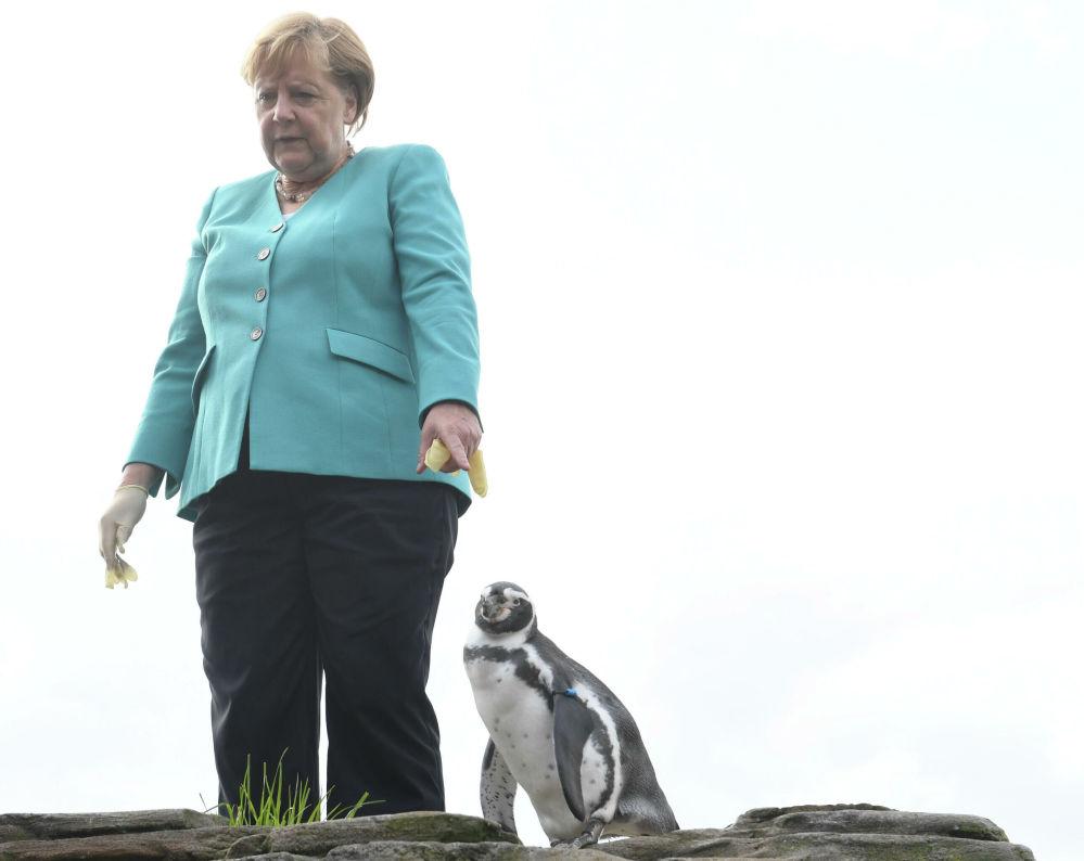 Německá kancléřka Angela Merkelová krmí tučňáky ve Stralsundu, severní Německo.