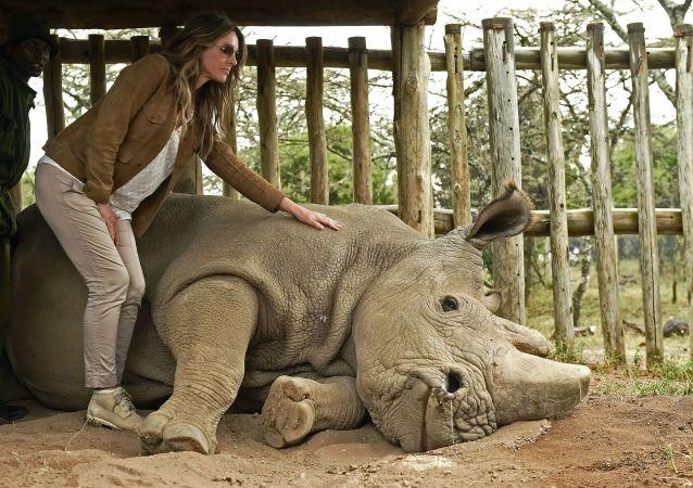Poslední samec bílých nosorožců na světě, 45 let starý Súdán