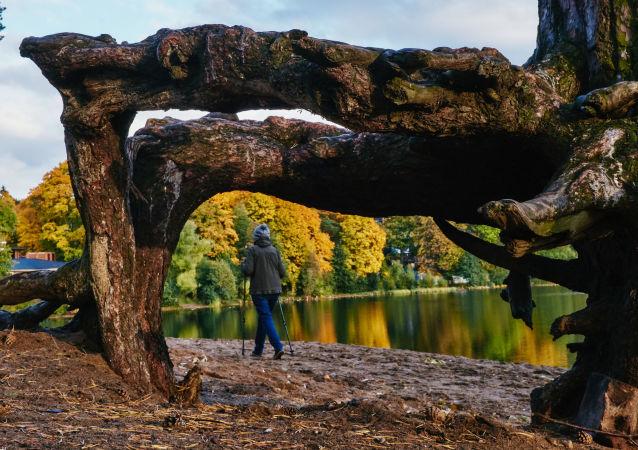 Žena se zabývá severskou chůzi v blízkosti Suzdalských jezer v Petrohradě