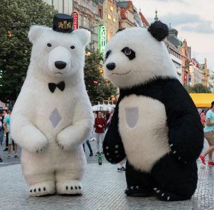 Panda a lední medvěd v centru Prahy