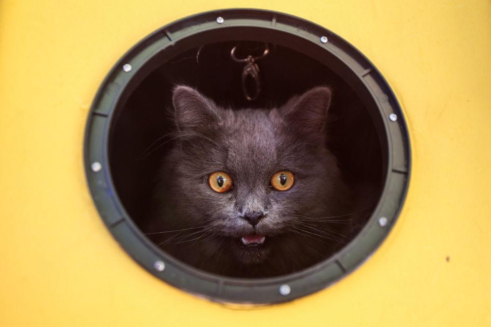 Kočka v kulatém okně