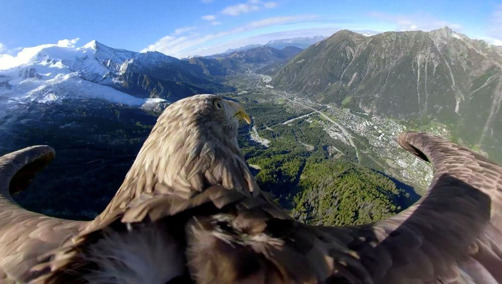Orel bělohlavý letí nad horami ve francouzském Chamonixu