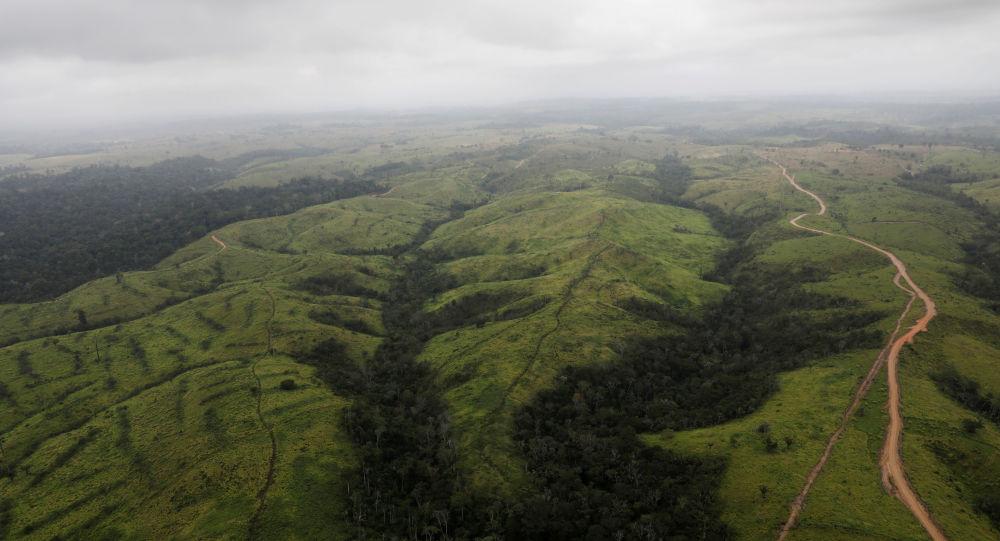 Amazonský prales