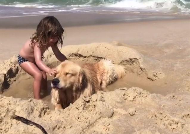 Zlatý retrívr na pláži