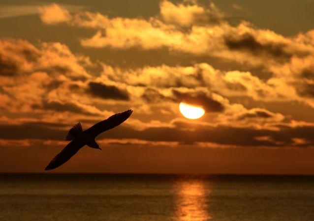 Pták letí nad jezerem Bajkal.