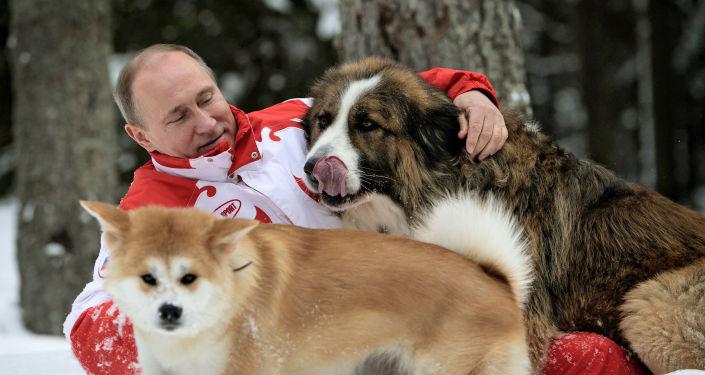 Bulharský ovčák Buffy a akita inu Jume darovaný úřady japonské prefektury Akita