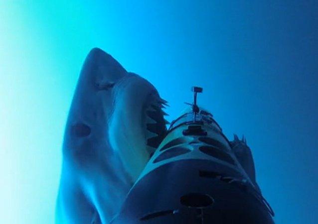 Útoky žraloků na železné tuleně byly natočeny na video