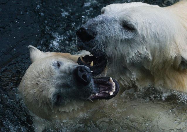 Zvířata Moskevské zoo