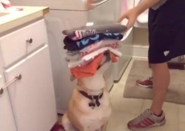 Nejlepší pes-domácí pomocník
