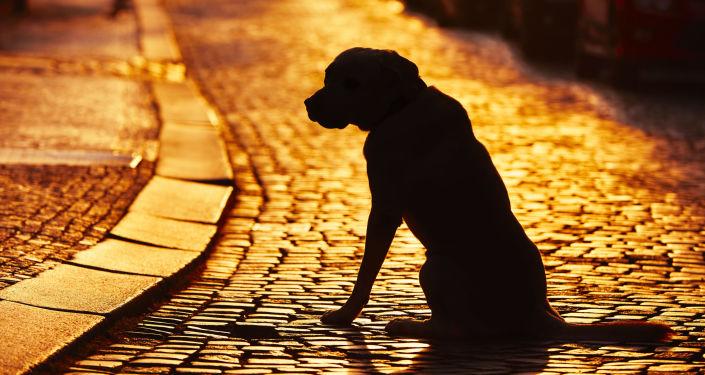 Pes na ulici. Ilustračńí foto