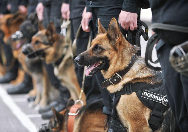 Psi ve službě