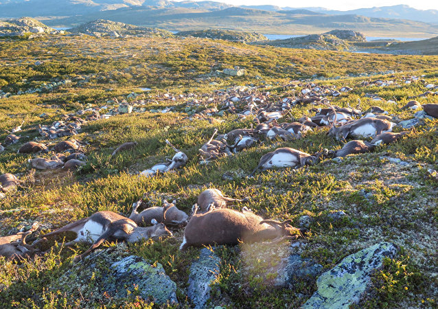 Mrtví jeleni