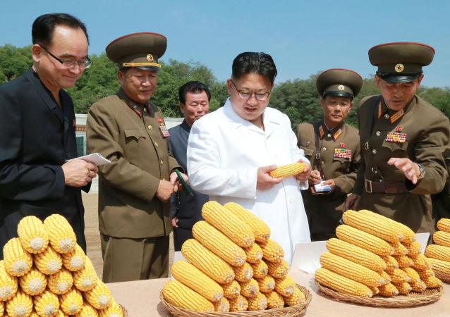 Vojáci ukázali severokorejskému lidrovi úrodu kukuřice. Pro demonstraci byly vybrány úplně stejné klasy