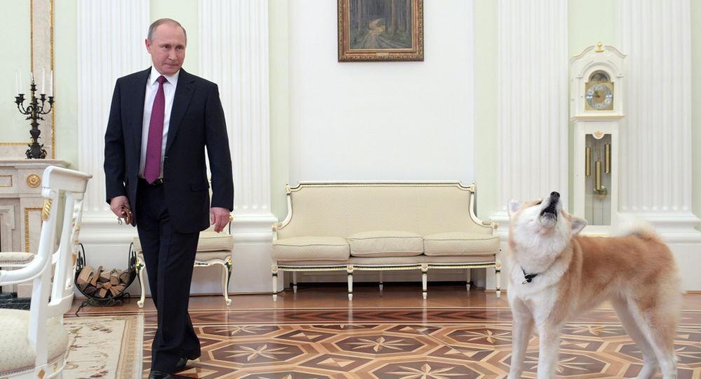 Putin ukazuje  japonským novinářům psa Jume