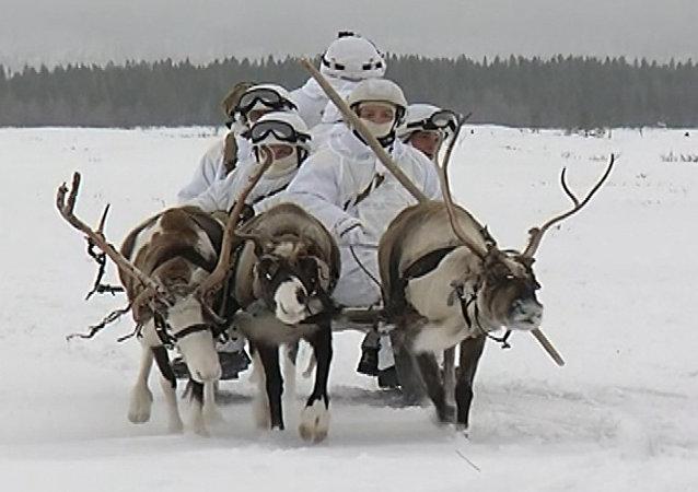 Za Polárním kruhem se konala cvičení mořských pěšáků se soby a psy