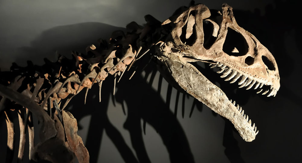 Kostra dinosauru