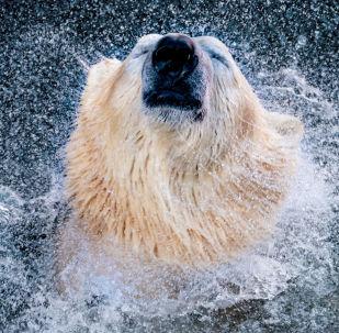 Vládci Arktidy