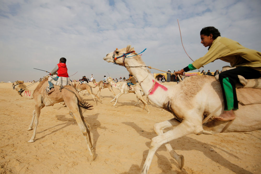 Jezdci, většinou děti, na velbloudích dostizích na poušti nedaleko města Ismailie v Egyptu