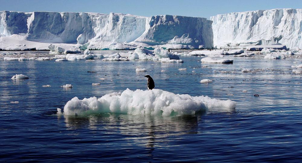 Tučňák v Antarktidě