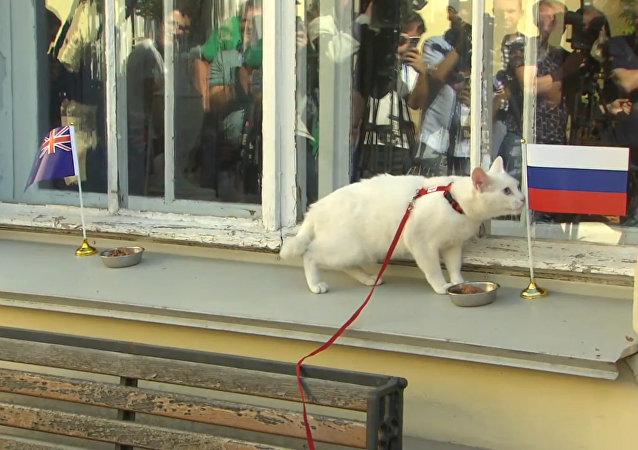 Kocour věštec předpověděl vítězství Ruska v prvním zápase Konfederačního poháru