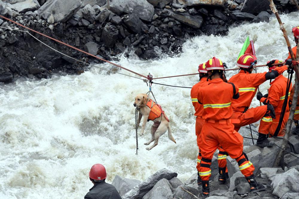 Záchranáři evakuují psa z místa sesuvu půdy v čínské provincii S'-čchuan