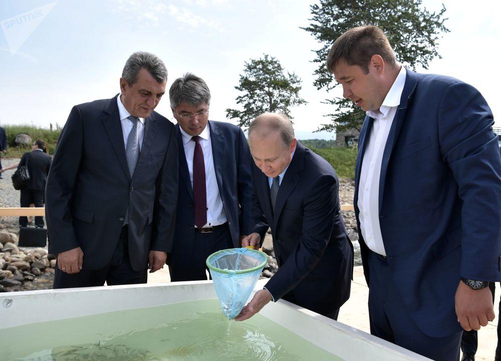 Ruský prezident Vladimir Putin se během návštěvy Bajkalské státní přírodní rezervace zúčastnil ceremonie vypuštění mláďat omulů do jezera