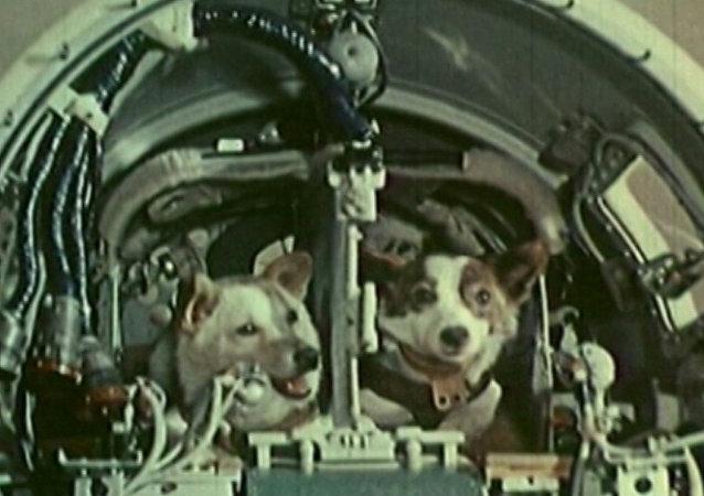 Kosmičtí pejsci: Před 57 lety se Bělka a Strelka vydali do vesmíru