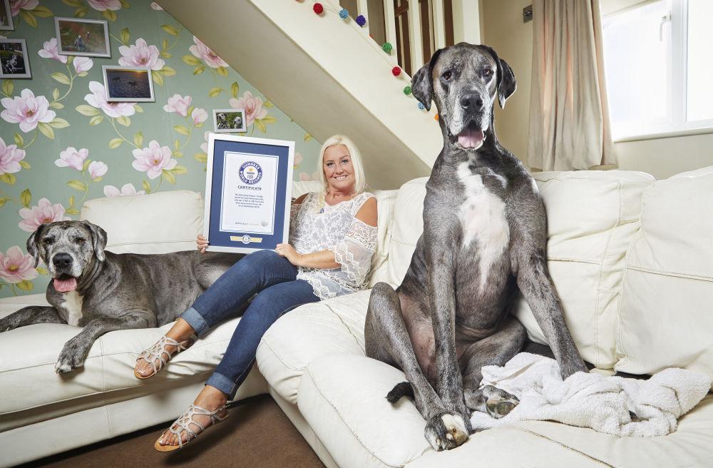 Nejpodivnější rekordy z Guinnessovy knihy