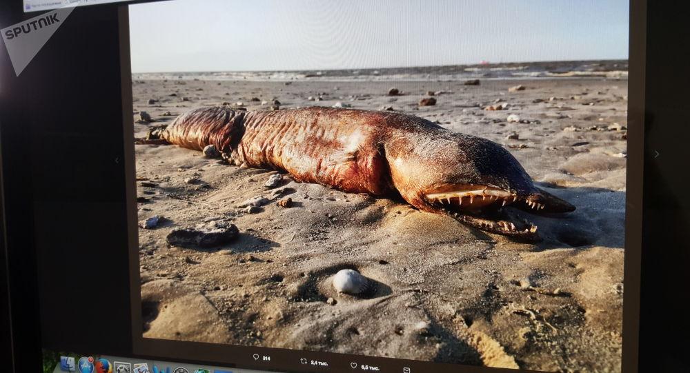 Záhadná bytost, vyplavenána na břeh v Texasu