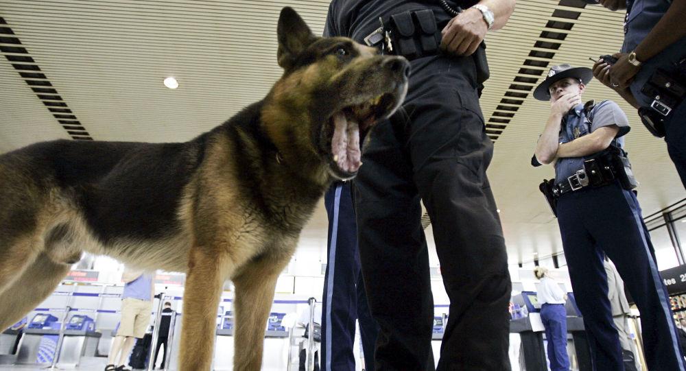 Pes v terminálu letiště v Los Angeles