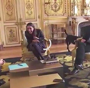 Pes Macrona vyrušil jednání v Elysejském paláci. Video