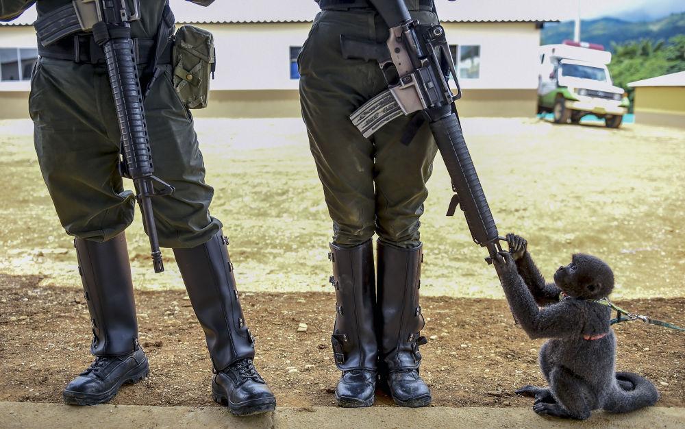 Opice si hraje s puškou policistky v Kolumbii