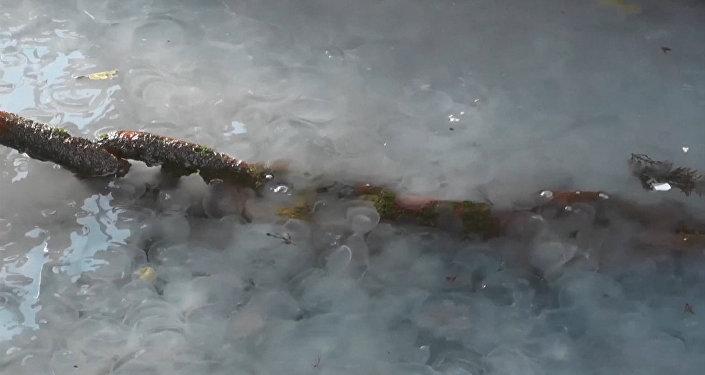 Skoro horor: Medúzy přepadly Krym