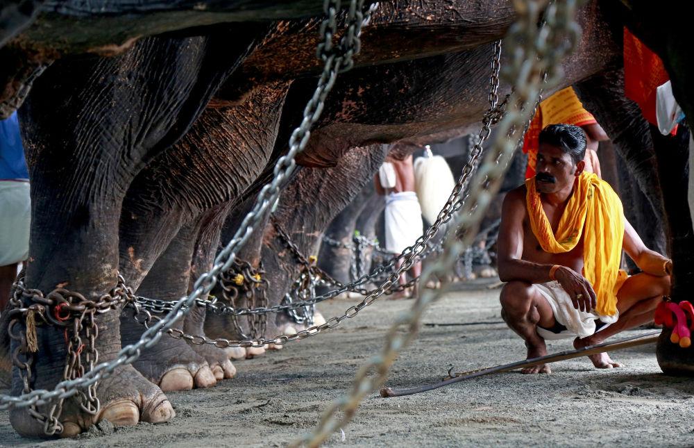 Honák se stará o slony během každoročního festivalu Vrischikolsavam v Indii