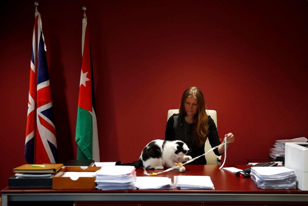 Vice-velvyslankyně Velké Británie v Jordánsku Laura Daubanová si hraje s Lawrencem Abdunským – prvním oficiálním kocourem velvyslanectví