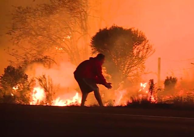 Malý šťastlivec: záchrana králíka z ohně v Kalifornii byla natočena na video