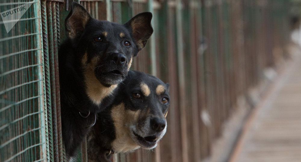 Útulek pro toulavé psy v Moskvě