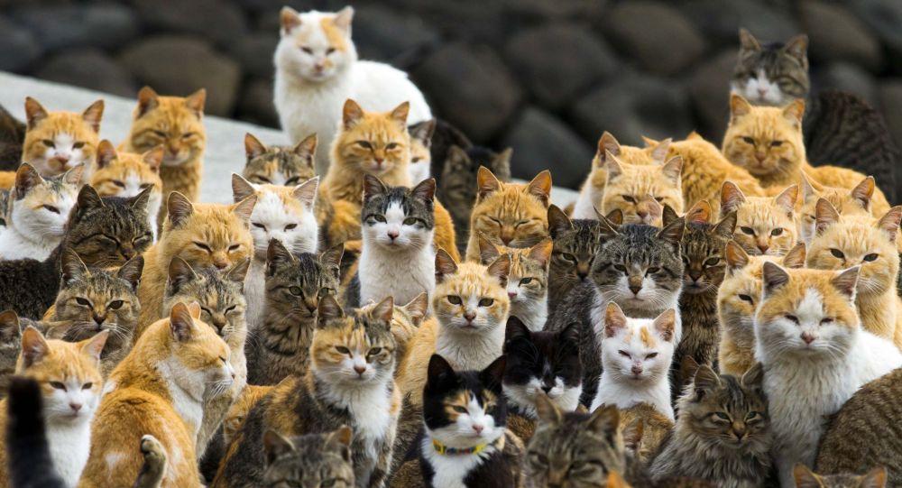 Kočky. Ilustrační foto