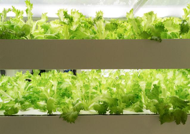 Zelený salát