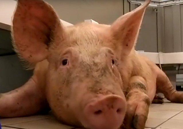 Evropští farmáři zuřivě reagují na protiruské sankce: výběr nejlepších videí